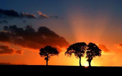 suffolk-savanna-sunset[1]
